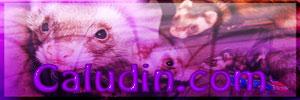 [Image: CaludinBanner6.jpg]